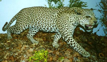 wildlife-museum-listing